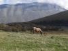 monte-patino-sibillini-cavalli