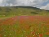 Escursione-passeggiata-fioritura di Castelluccio