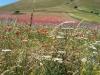escursione,passeggiata,sibillini,fioritura,castelluccio2