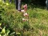 escursione,passeggiata,sibillini,fioritura,castelluccio