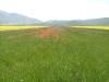 passeggiata fioritura castelluccio escursioni sibillini