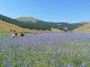Escursione passeggiata per la fioritura di Castelluccio di Norcia