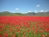 Escursioni,passeggiate,fioritura castelluccio,norcia,monti sibillini