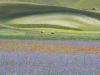 escursione-fioritura-castelluccio