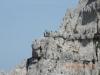 Escursione Monte Bove Sibillni Camosci