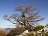 escursione-monte-cardosa-sibillini0