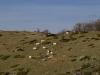 escursione-monte-cardosa-sibillini7
