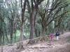 escursione-bosco-sacro-spoleto-monte-luco