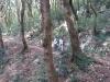 escursione-monte-luco-lecceta