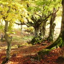 Godiamoci la natura che va in letargo…