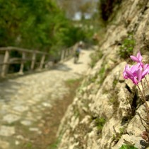 Il trekking di tutta l'Umbria: il sentiero francescano e non solo