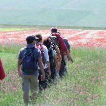 La fioritura di Castelluccio – La prima Sabato scorso 21 giugno