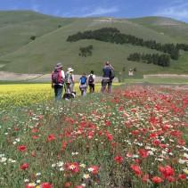 La prima passeggiata stagionale tra i prati in fiore di Castelluccio