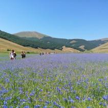 La fioritura di Castelluccio di ieri 19 Luglio: un ultimo grandioso regalo!