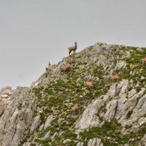 Monte Bove: il grande anello tra le cime e la valle