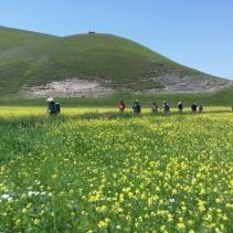 L'escursione di ieri tra i fiori di Castelluccio