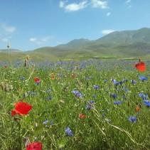 Il tuffo tra i fiori di ieri a Castelluccio!
