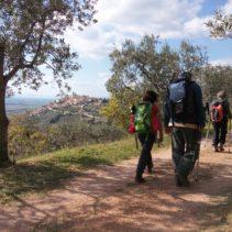Da Spoleto ad Assisi: i sentieri degli ulivi, le vie di Francesco
