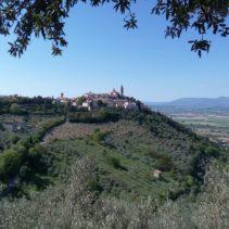 I sentieri degli ulivi, le vie di Francesco: da Trevi all'abbazia di Sassovivo