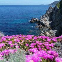 Trekking all'Isola d'Elba: la gemma del Tirreno!