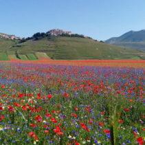 La fioritura di Castelluccio: un'immersione nella bellezza!!