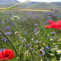 La favolosa passeggiatona della fioritura