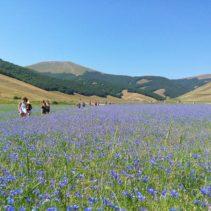 La fioritura di Castelluccio: un'immersione nello spettacolo vero!!